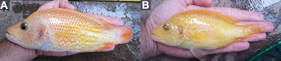 A hand holding a fish  Description automatically generated