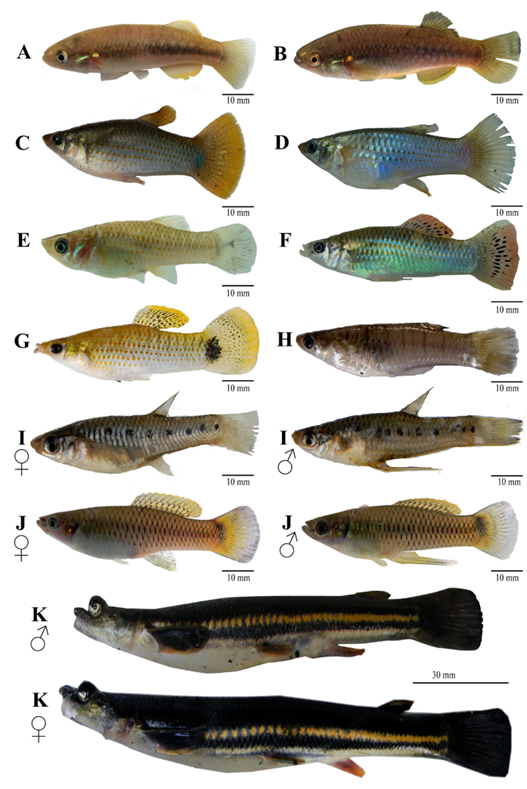 A group of fish  Description automatically generated